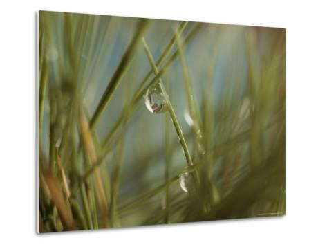Water Droplets Clinging To Blades of Grass-Todd Gipstein-Metal Print