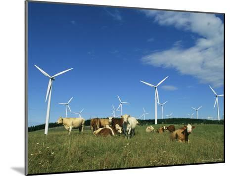 Cattle in a Field with Rows of Windmills-Steve Winter-Mounted Photographic Print