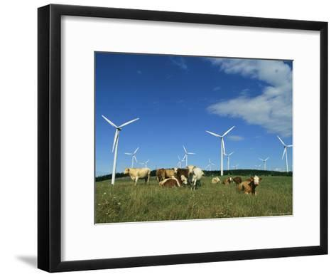 Cattle in a Field with Rows of Windmills-Steve Winter-Framed Art Print