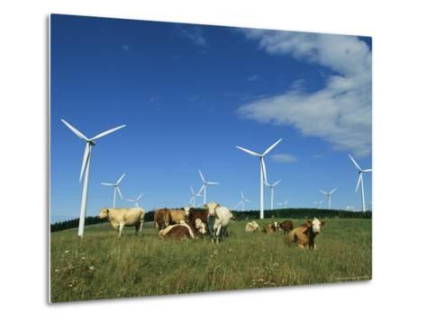 Cattle in a Field with Rows of Windmills-Steve Winter-Metal Print