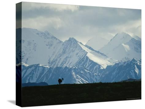Alaskan Moose Against a Backdrop of Jagged Snow-Covered Mountains-Michael S^ Quinton-Stretched Canvas Print
