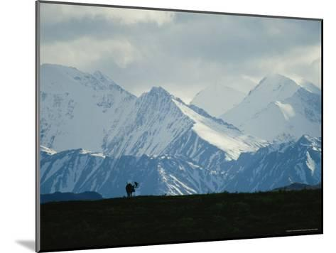Alaskan Moose Against a Backdrop of Jagged Snow-Covered Mountains-Michael S^ Quinton-Mounted Photographic Print