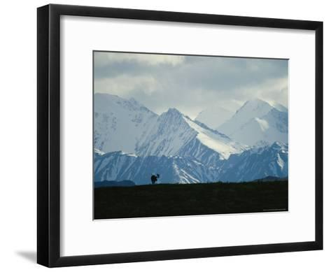Alaskan Moose Against a Backdrop of Jagged Snow-Covered Mountains-Michael S^ Quinton-Framed Art Print