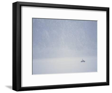 Canada Geese and Evergreen Trees in a Snowy Copper River Landscape-Michael S^ Quinton-Framed Art Print