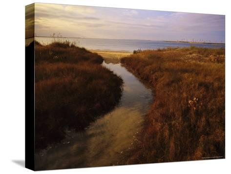Tidal Creek Through Salt Marsh Grasses-Raymond Gehman-Stretched Canvas Print
