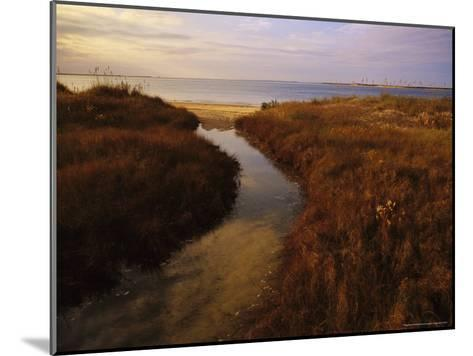 Tidal Creek Through Salt Marsh Grasses-Raymond Gehman-Mounted Photographic Print