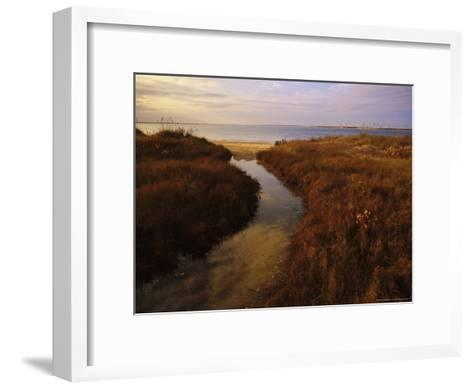 Tidal Creek Through Salt Marsh Grasses-Raymond Gehman-Framed Art Print