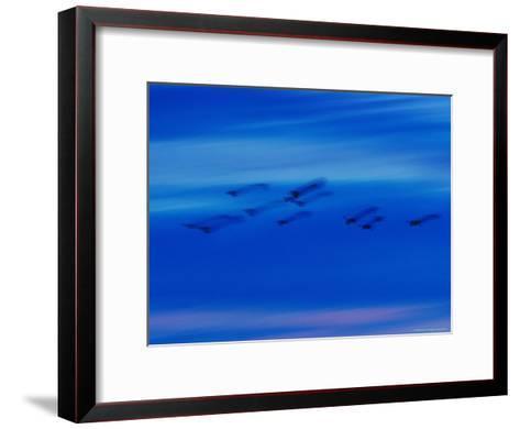 Birds in Flight in a Blue Twilight Sky-Randy Olson-Framed Art Print