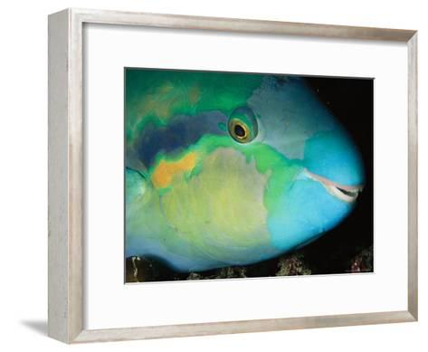 Close View of the Eye and Mouth of a Yellowbarred Parrotfish-Tim Laman-Framed Art Print