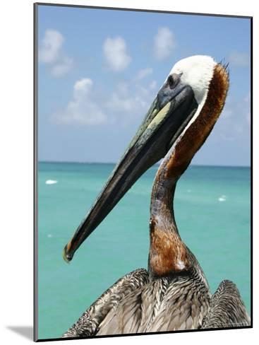 Personable Pelican Portrait Along Florida's Coastline-Stephen St^ John-Mounted Photographic Print