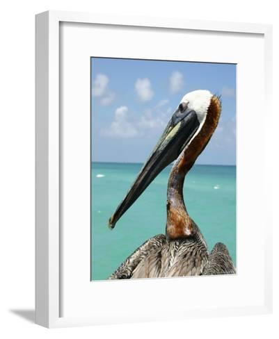 Personable Pelican Portrait Along Florida's Coastline-Stephen St^ John-Framed Art Print