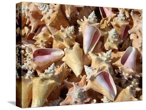 Patterned-Stack of Colorful Queen Conch Shells-Stephen St^ John-Stretched Canvas Print
