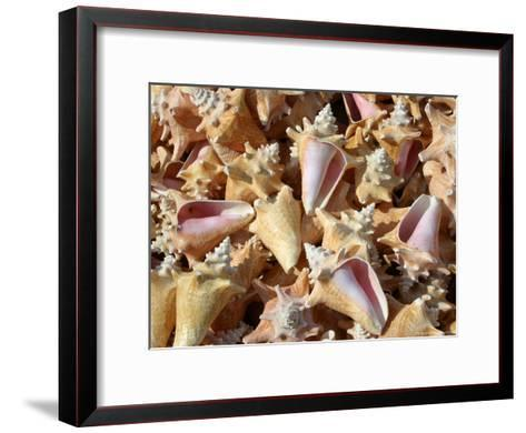 Patterned-Stack of Colorful Queen Conch Shells-Stephen St^ John-Framed Art Print