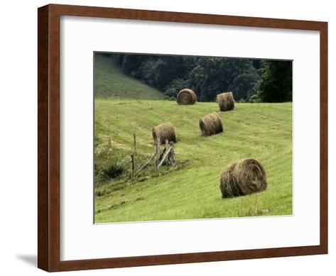 Rolls of Cut Hay Dot a Field on a North Carolina Farm-Rex Stucky-Framed Art Print