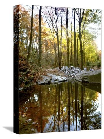 Woodland View at Long Branch Nature Center-Rex Stucky-Stretched Canvas Print