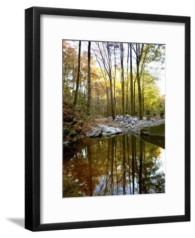 Woodland View at Long Branch Nature Center-Rex Stucky-Framed Art Print