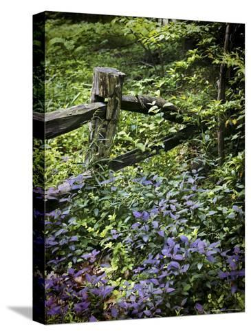 Foliage Covers a Wood Fence in Long Branch Nature Center-Rex Stucky-Stretched Canvas Print