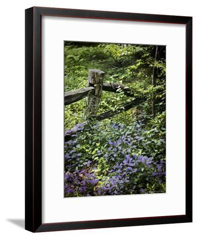 Foliage Covers a Wood Fence in Long Branch Nature Center-Rex Stucky-Framed Art Print