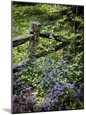 Foliage Covers a Wood Fence in Long Branch Nature Center-Rex Stucky-Mounted Photographic Print