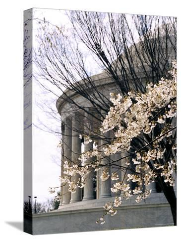 Cherry Blossoms Frame the Jefferson Memorial-Rex Stucky-Stretched Canvas Print