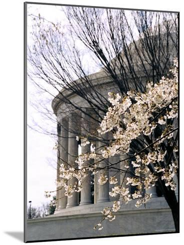 Cherry Blossoms Frame the Jefferson Memorial-Rex Stucky-Mounted Photographic Print