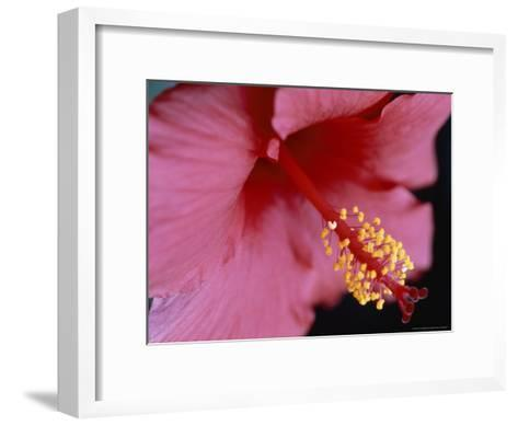 Close View of a Hibiscus Flower-Taylor S^ Kennedy-Framed Art Print