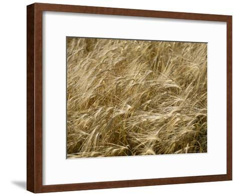 Field of Wheat Sways in the Soft Summer Breeze-Taylor S^ Kennedy-Framed Art Print
