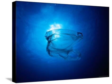 Floating Plastic Bag Dangerously Resembles a Sea Jelly-Robert Halstead-Stretched Canvas Print