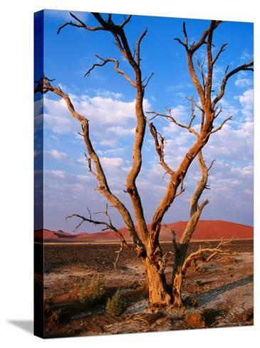 Dead Thorn Tree with Giant Sand Dunes in Distance, Near Sossusvlei-Karl Lehmann-Stretched Canvas Print