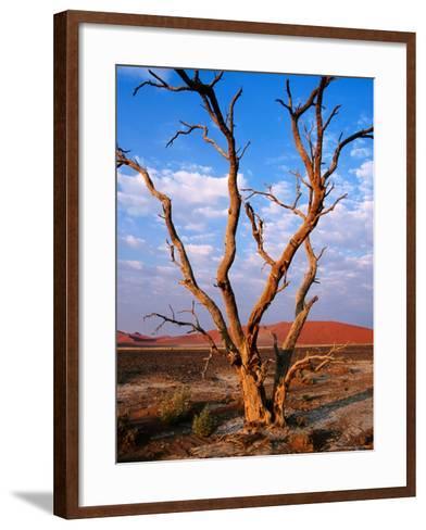 Dead Thorn Tree with Giant Sand Dunes in Distance, Near Sossusvlei-Karl Lehmann-Framed Art Print