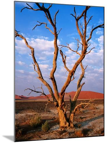 Dead Thorn Tree with Giant Sand Dunes in Distance, Near Sossusvlei-Karl Lehmann-Mounted Photographic Print