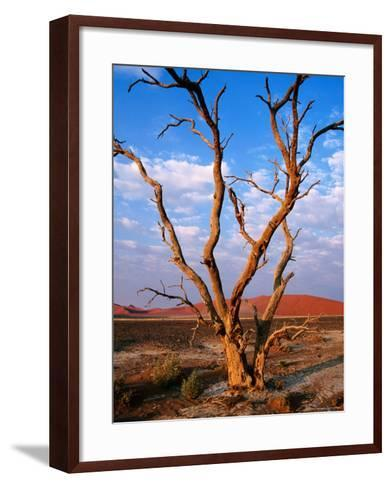 Dead Thorn Tree with Giant Sand Dunes in Distance, Near Sossusvlei-Karl Lehmann-Framed Art Print