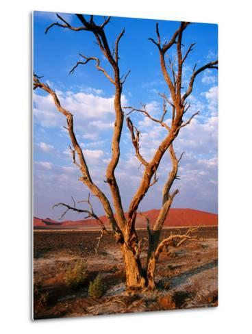 Dead Thorn Tree with Giant Sand Dunes in Distance, Near Sossusvlei-Karl Lehmann-Metal Print