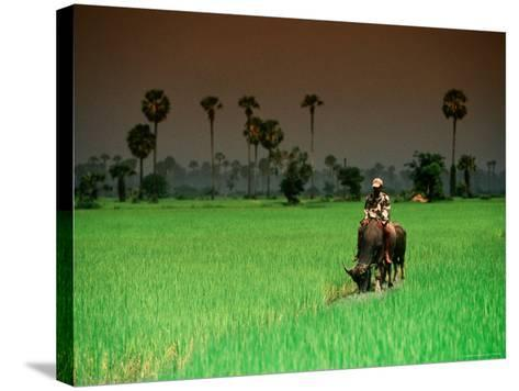 Boy on Buffalo in Rice Field-Antony Giblin-Stretched Canvas Print