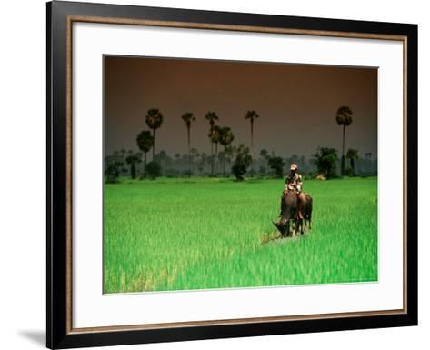 Boy on Buffalo in Rice Field-Antony Giblin-Framed Art Print