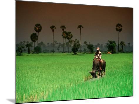 Boy on Buffalo in Rice Field-Antony Giblin-Mounted Photographic Print