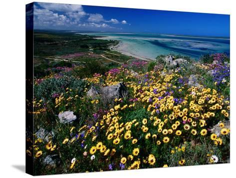 Overhead of Beach and Wildflowers-Frans Lemmens-Stretched Canvas Print