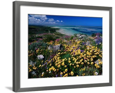 Overhead of Beach and Wildflowers-Frans Lemmens-Framed Art Print