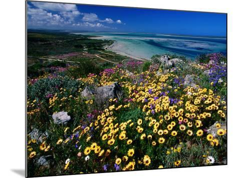 Overhead of Beach and Wildflowers-Frans Lemmens-Mounted Photographic Print
