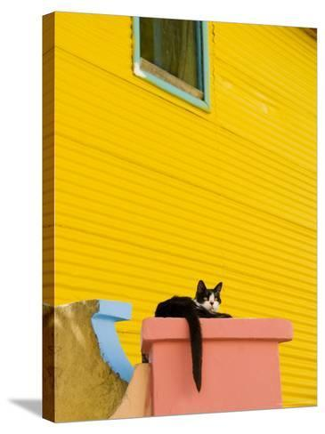 Cat Resting on Pillar Next to Yellow Wall, Barrio La Boca-Roberto Gerometta-Stretched Canvas Print
