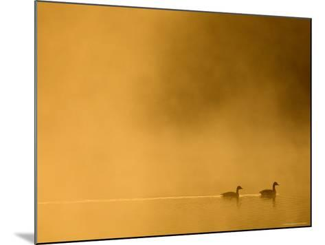 Two Canada Geese on a Lake at Sunrise-Guylain Doyle-Mounted Photographic Print