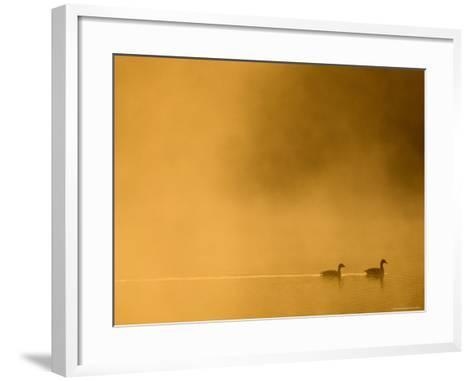 Two Canada Geese on a Lake at Sunrise-Guylain Doyle-Framed Art Print