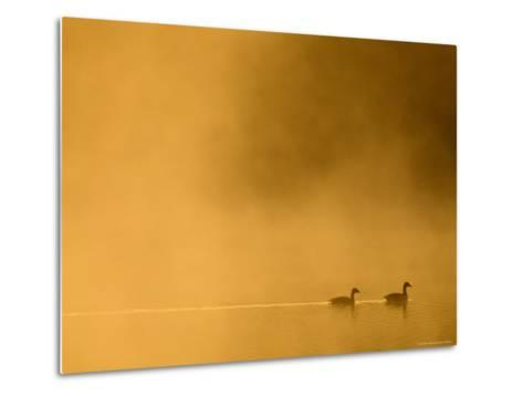 Two Canada Geese on a Lake at Sunrise-Guylain Doyle-Metal Print