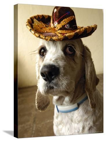 Dog Wearing Sombrero-Dan Gair-Stretched Canvas Print