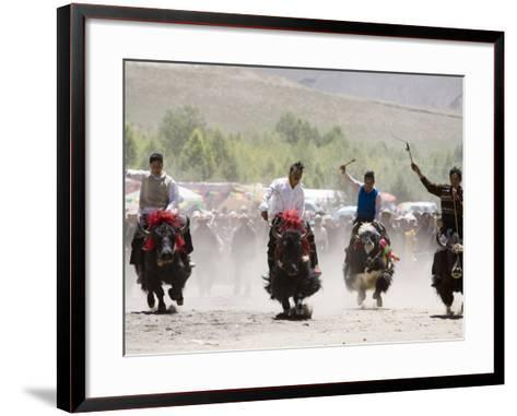 Yak Racing at Gyantse Horse Racing Festival-Tim Hughes-Framed Art Print