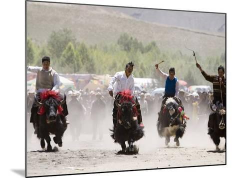 Yak Racing at Gyantse Horse Racing Festival-Tim Hughes-Mounted Photographic Print