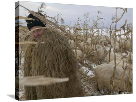 Shepherd Wrapped in Sheep's Fleece Tends to His Sheep, Transylvania-Gavin Quirke-Stretched Canvas Print