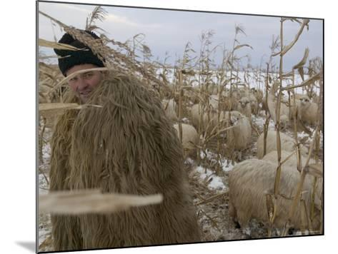 Shepherd Wrapped in Sheep's Fleece Tends to His Sheep, Transylvania-Gavin Quirke-Mounted Photographic Print