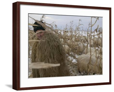 Shepherd Wrapped in Sheep's Fleece Tends to His Sheep, Transylvania-Gavin Quirke-Framed Art Print