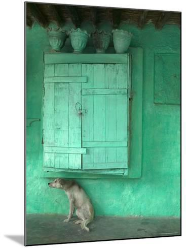 Dog Scratching Himself Against a Window Ledge-Gavin Quirke-Mounted Photographic Print